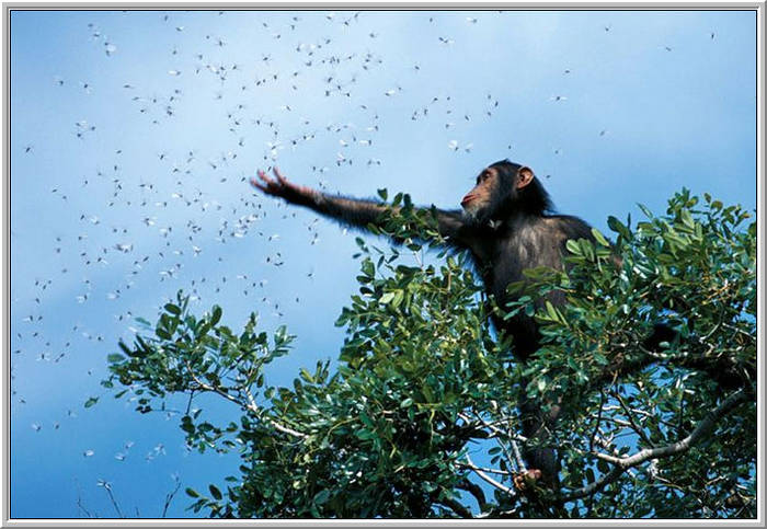 monkey-reaching