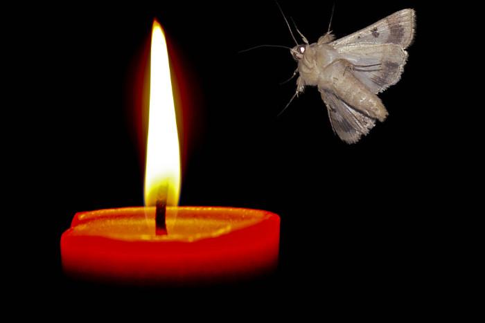 moth-to-flame - kopie